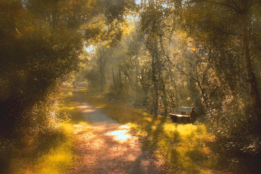 autumn_3737570_900x600